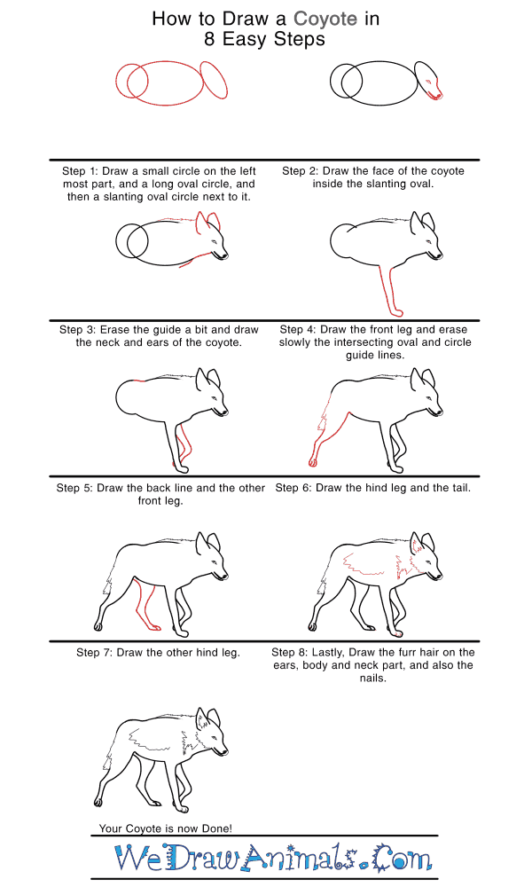 How to Draw a Realistic Coyote - Step-by-Step Tutorial