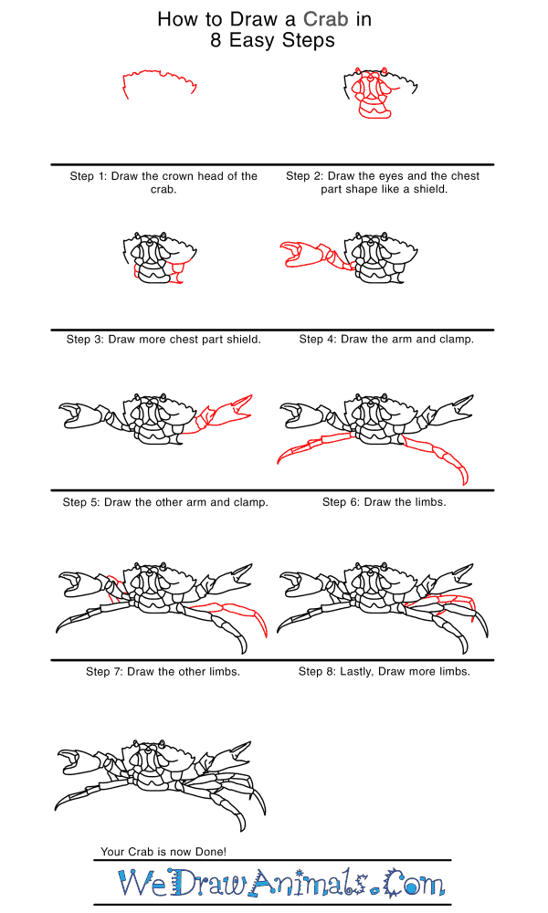 How to Draw a Realistic Crab - Step-by-Step Tutorial