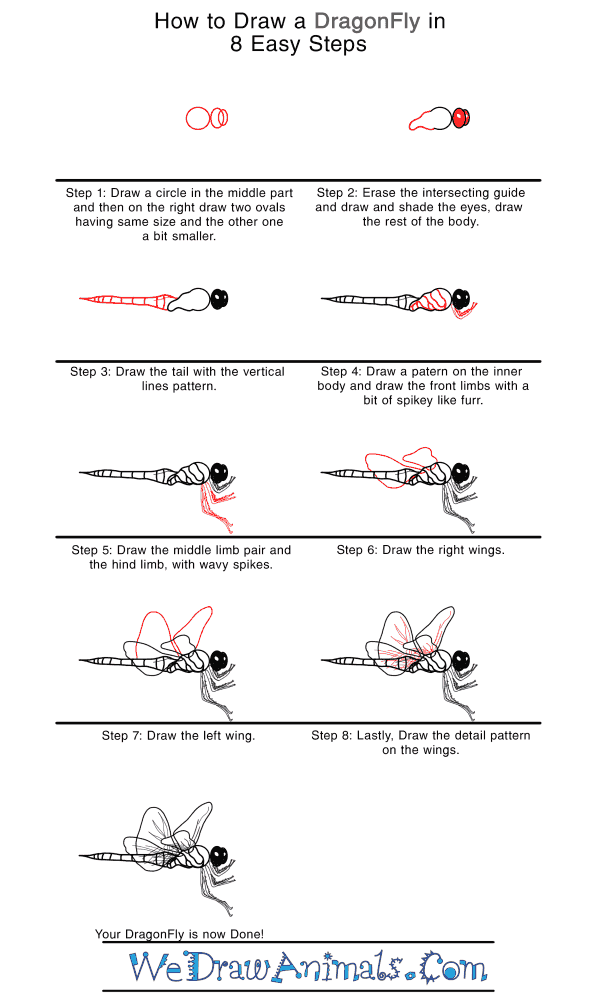 How to Draw a Realistic Dragonfly - Step-by-Step Tutorial