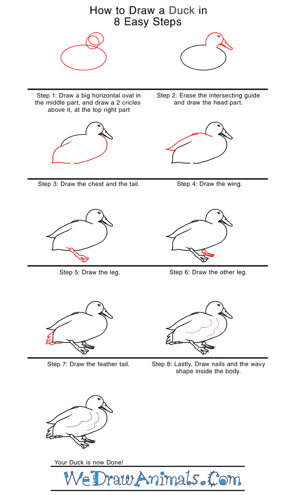 How to Draw a Realistic Duck - Step-by-Step Tutorial