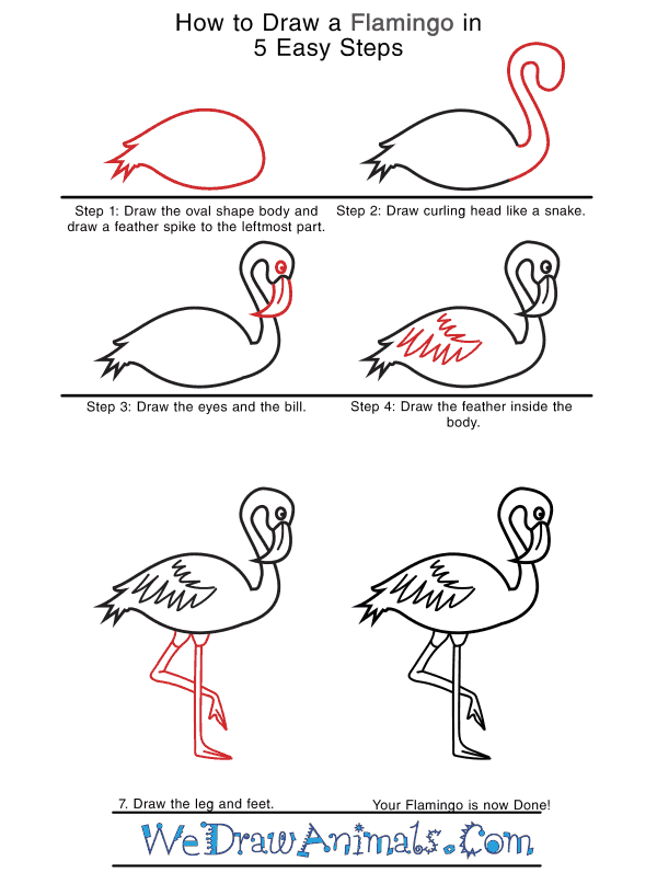 How to Draw a Realistic Flamingo - Step-by-Step Tutorial