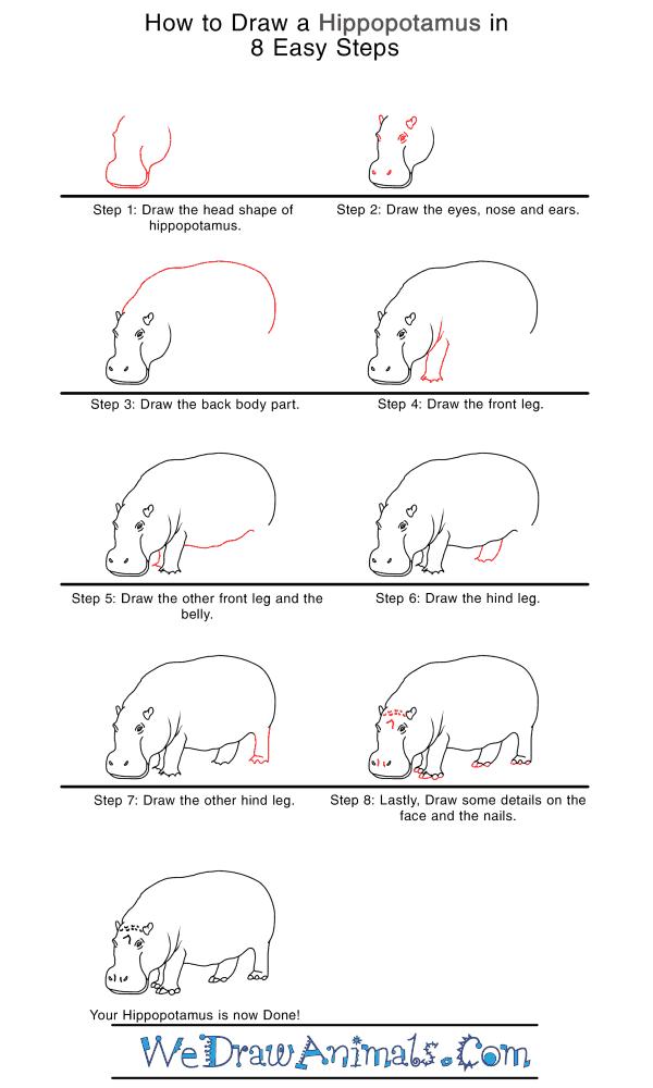How to Draw a Realistic Hippopotamus - Step-by-Step Tutorial