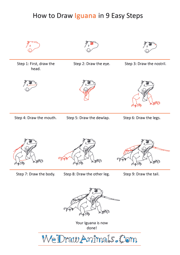 How to Draw a Realistic Iguana - Step-by-Step Tutorial