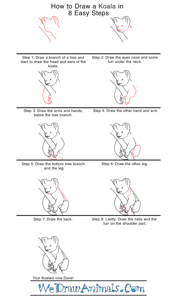 How to Draw a Realistic Koala - Step-by-Step Tutorial