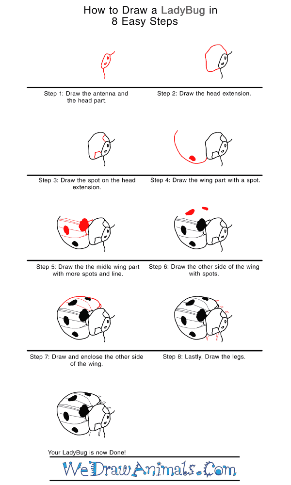 How to Draw a Realistic Ladybug - Step-by-Step Tutorial