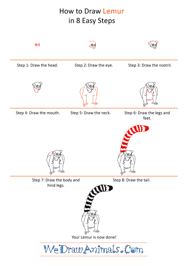 How to Draw a Realistic Lemur - Step-by-Step Tutorial