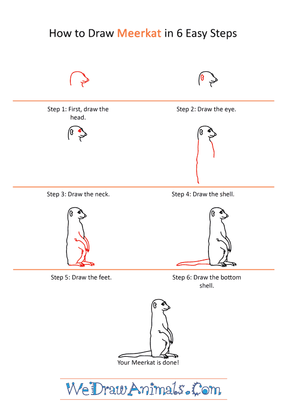How to Draw a Realistic Meerkat - Step-by-Step Tutorial