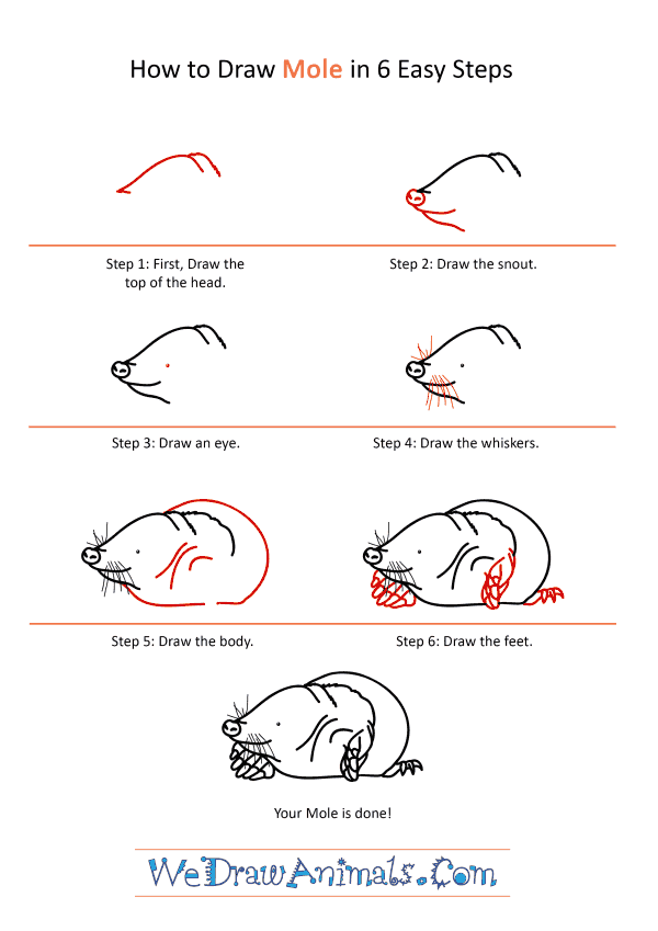 How to Draw a Realistic Mole - Step-by-Step Tutorial