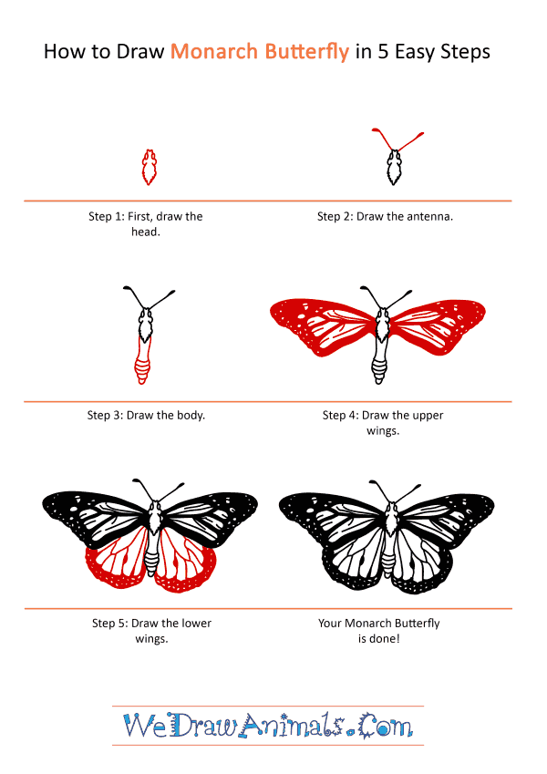 How to Draw a Realistic Monarch Butterfly - Step-by-Step Tutorial