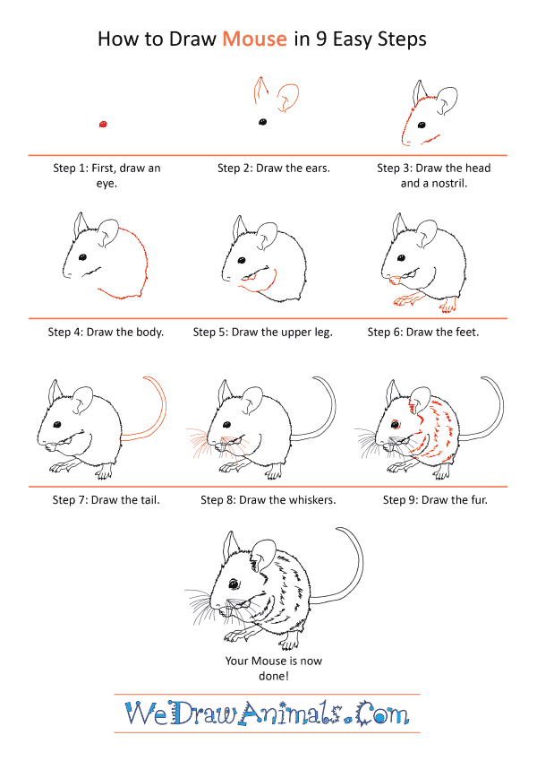 How to Draw a Realistic Mouse - Step-by-Step Tutorial