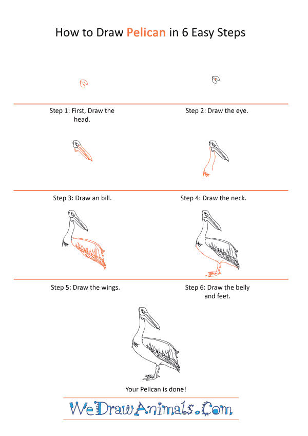 How to Draw a Realistic Pelican - Step-by-Step Tutorial