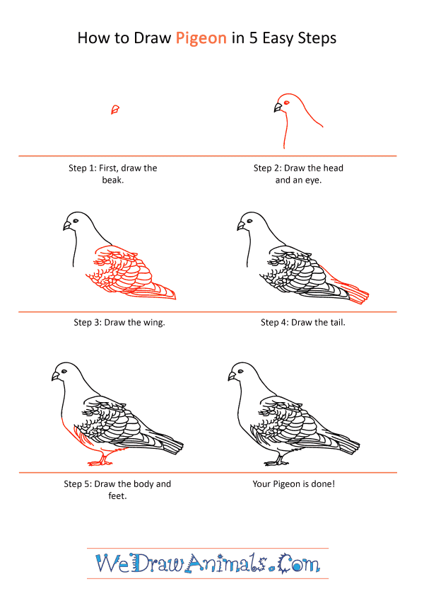 How to Draw a Realistic Pigeon - Step-by-Step Tutorial
