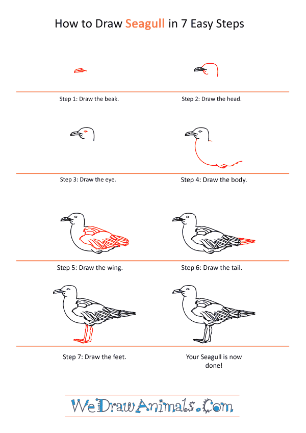How to Draw a Realistic Seagull - Step-by-Step Tutorial