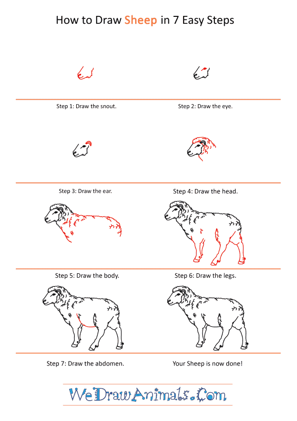 How to Draw a Realistic Sheep - Step-by-Step Tutorial