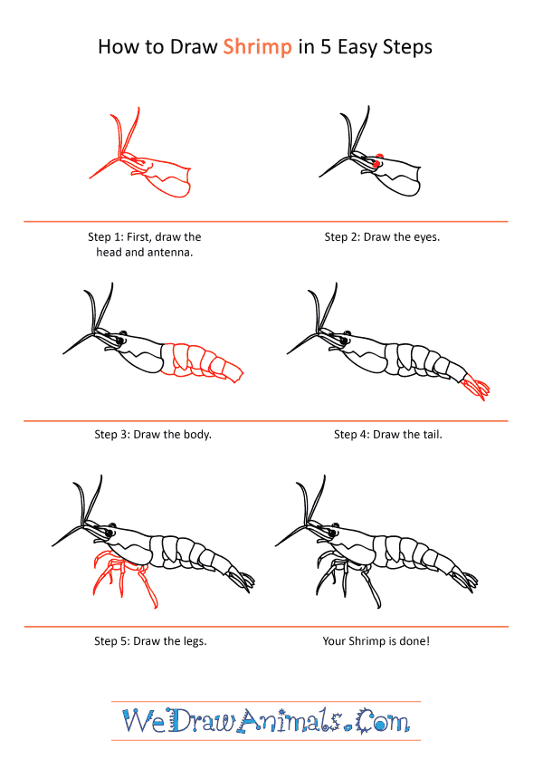 How to Draw a Realistic Shrimp - Step-by-Step Tutorial