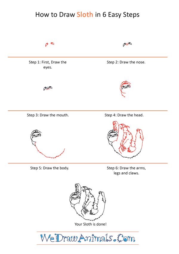 How to Draw a Realistic Sloth - Step-by-Step Tutorial