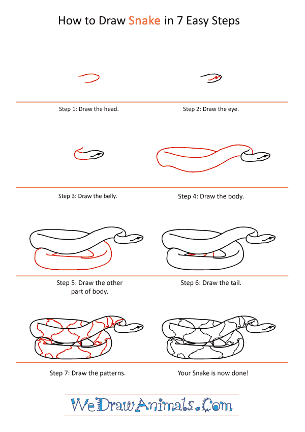 How to Draw a Realistic Snake - Step-by-Step Tutorial