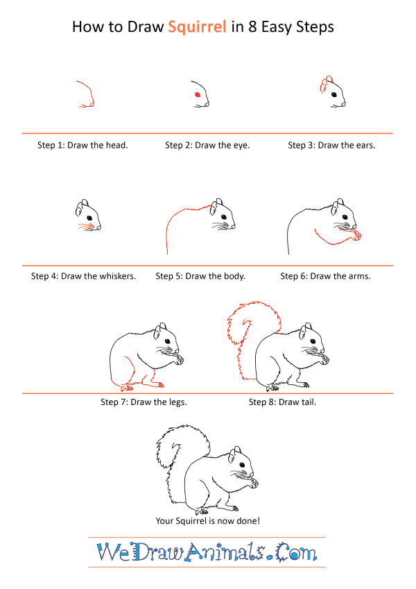 How to Draw a Realistic Squirrel - Step-by-Step Tutorial