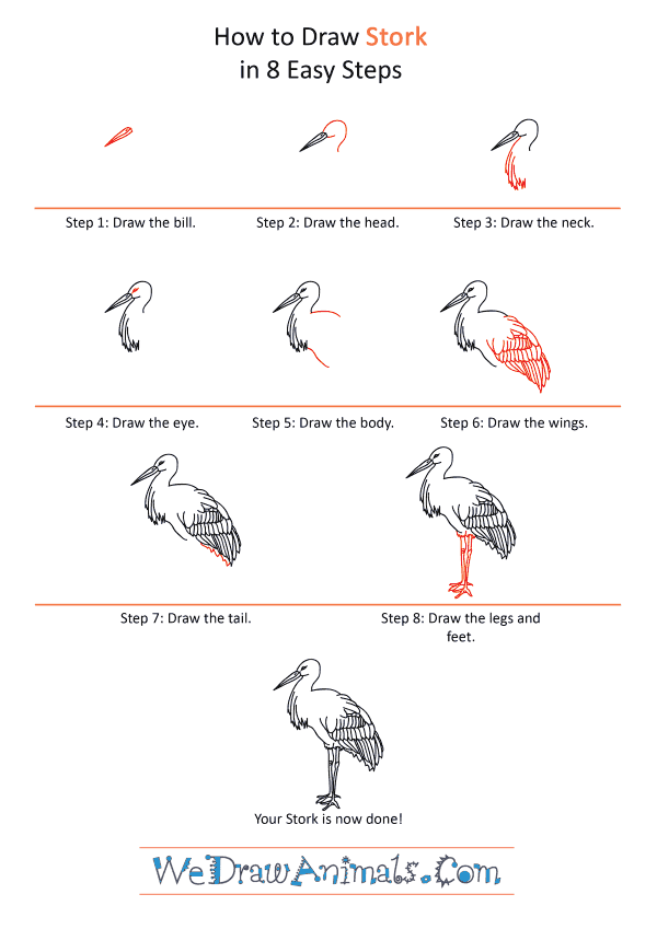 How to Draw a Realistic Stork - Step-by-Step Tutorial