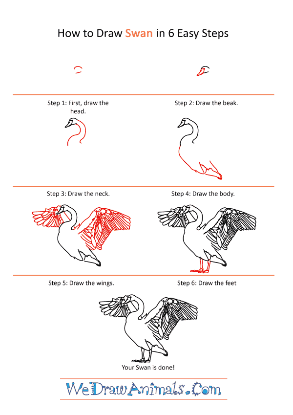 How to Draw a Realistic Swan - Step-by-Step Tutorial