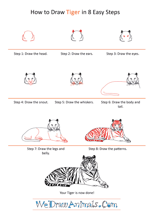 How to Draw a Realistic Tiger - Step-by-Step Tutorial