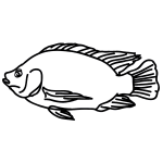 How to Draw a Tilapia
