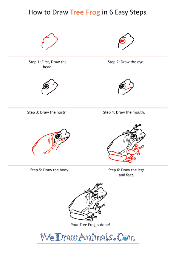 How to Draw a Realistic Tree Frog - Step-by-Step Tutorial