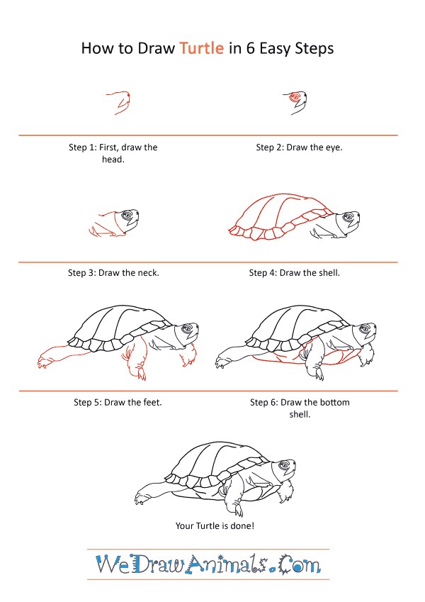 How to Draw a Realistic Turtle - Step-by-Step Tutorial