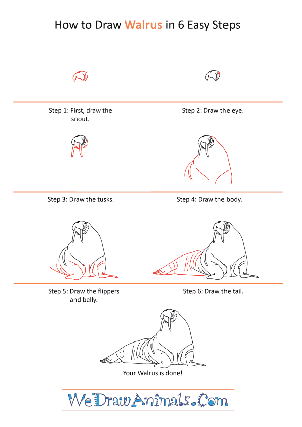 How to Draw a Realistic Walrus - Step-by-Step Tutorial