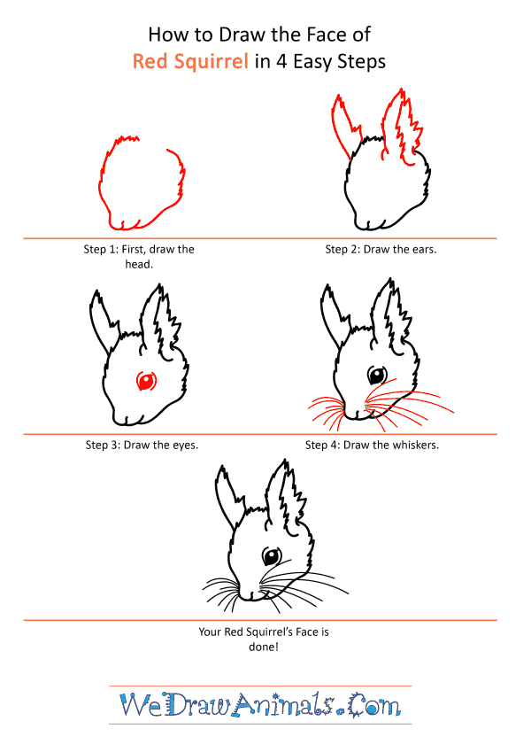 How to Draw a Red Squirrel Face - Step-by-Step Tutorial
