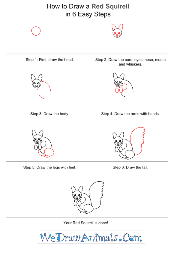 How to Draw a Red Squirrel for Kids - Step-by-Step Tutorial