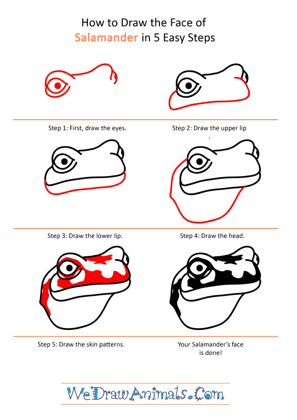 How to Draw a Salamander Face - Step-by-Step Tutorial
