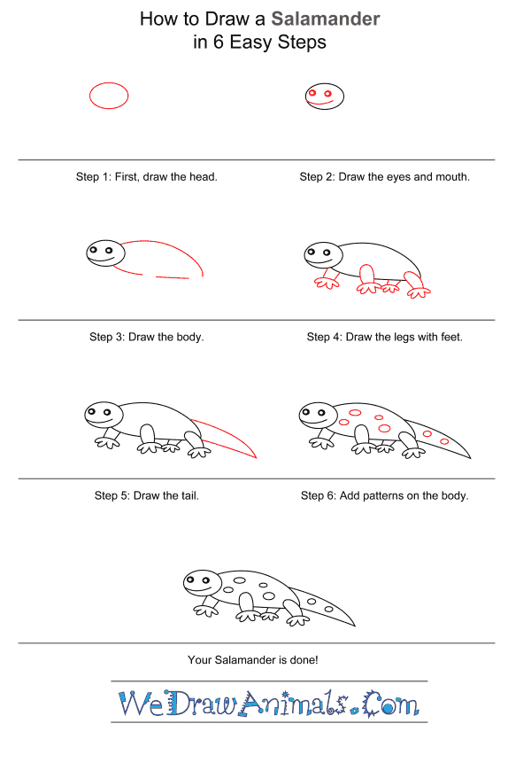 How to Draw a Salamander for Kids - Step-by-Step Tutorial