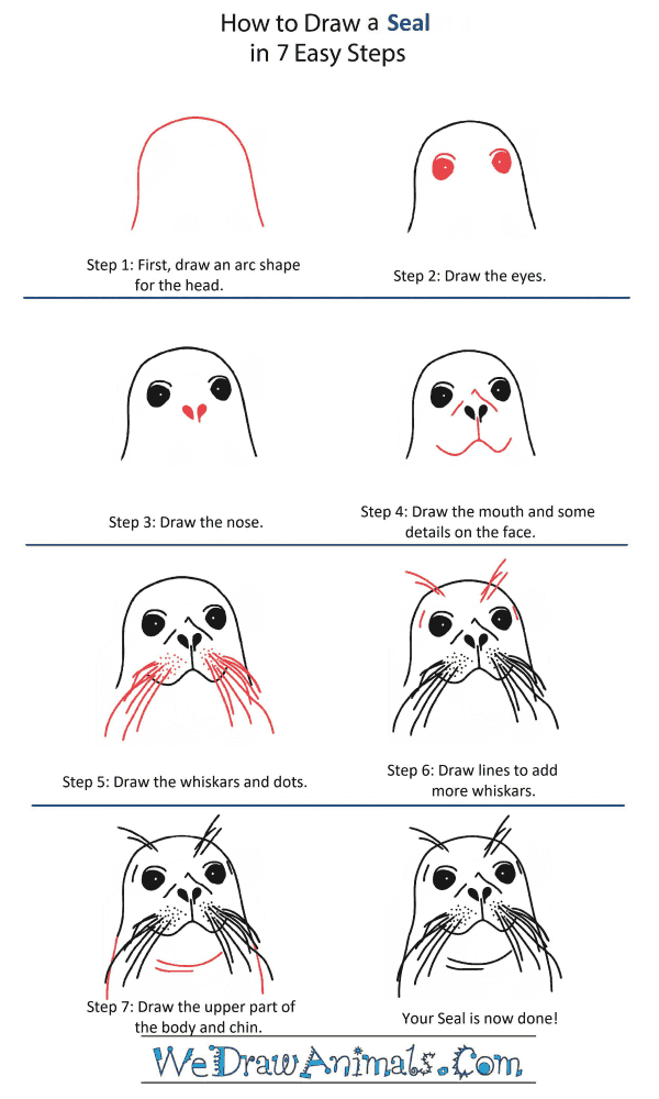 How to Draw a Seal Head - Step-by-Step Tutorial