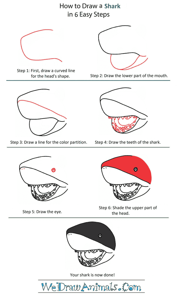 How to Draw a Shark Head - Step-by-Step Tutorial
