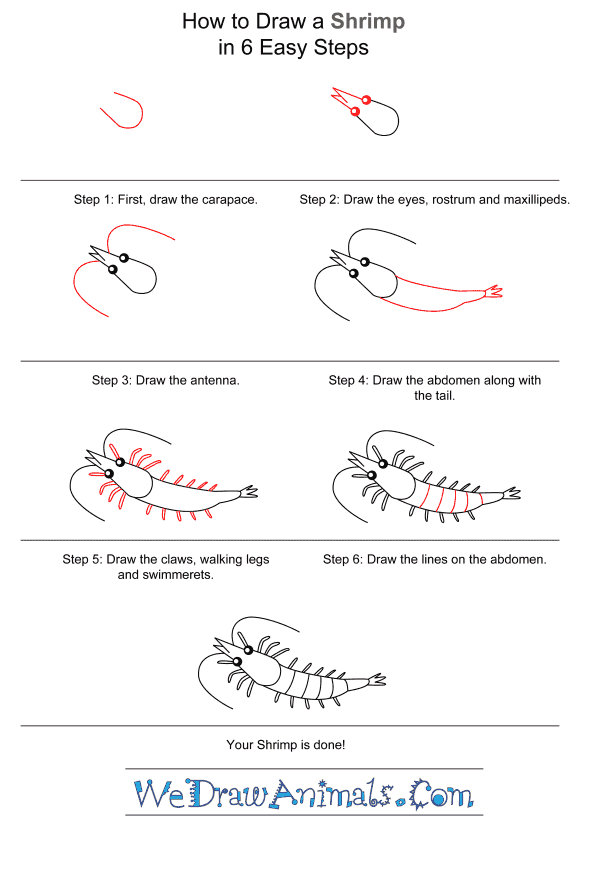 How to Draw a Shrimp for Kids - Step-by-Step Tutorial
