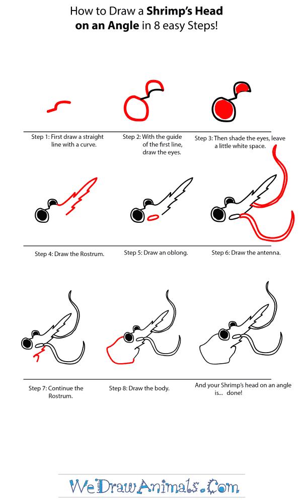 How to Draw a Shrimp Head - Step-by-Step Tutorial