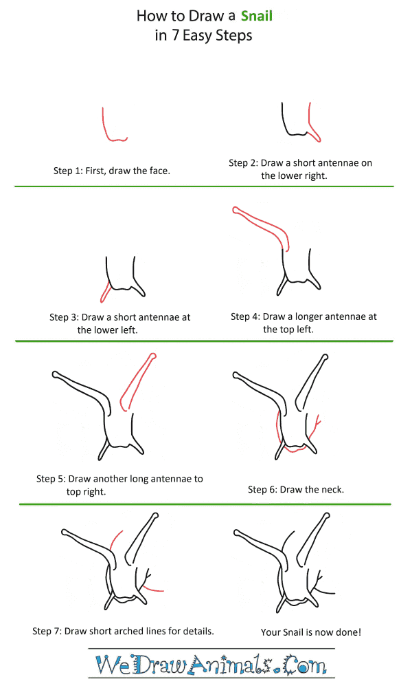How to Draw a Snail Head - Step-by-Step Tutorial