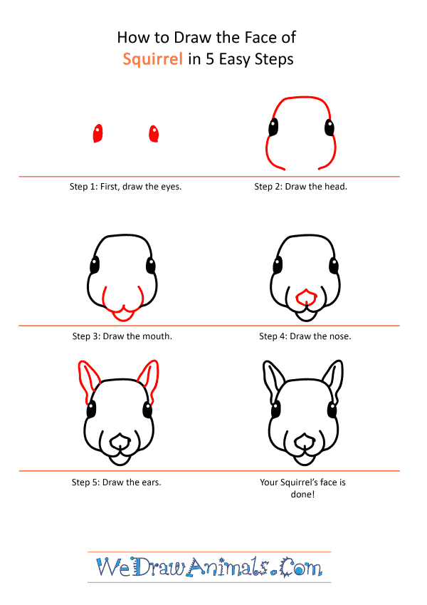 How to Draw a Squirrel Face - Step-by-Step Tutorial