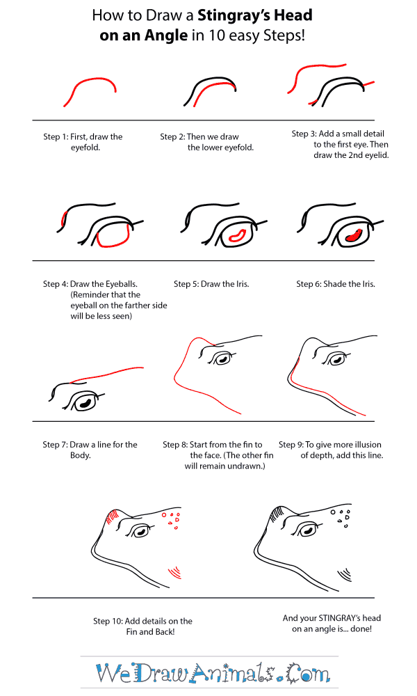 How to Draw a Stingray Head - Step-by-Step Tutorial