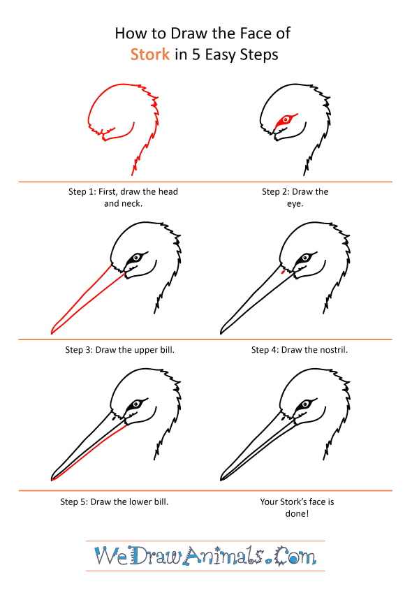 How to Draw a Stork Face - Step-by-Step Tutorial