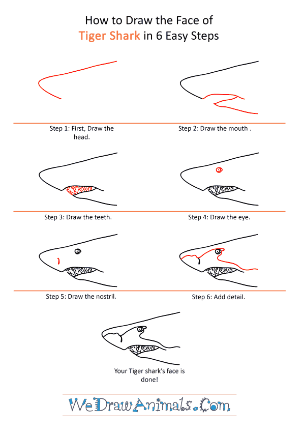 How to Draw a Tiger Face - Step-by-Step Tutorial