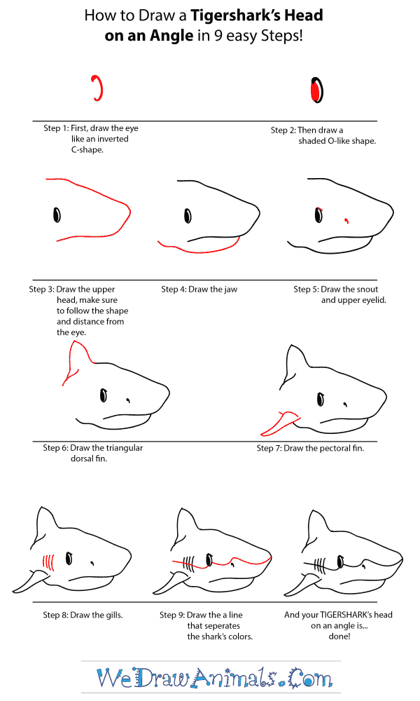 How to Draw a Tiger Shark Head - Step-by-Step Tutorial