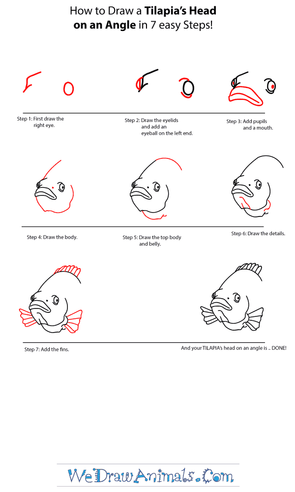 How to Draw a Tilapia Head - Step-by-Step Tutorial