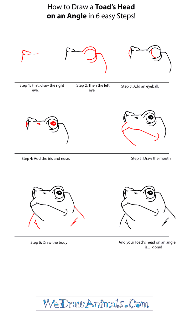How to Draw a Toad Head - Step-by-Step Tutorial