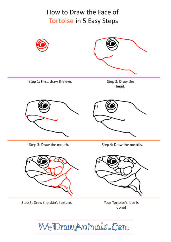How to Draw a Tortoise Face - Step-by-Step Tutorial