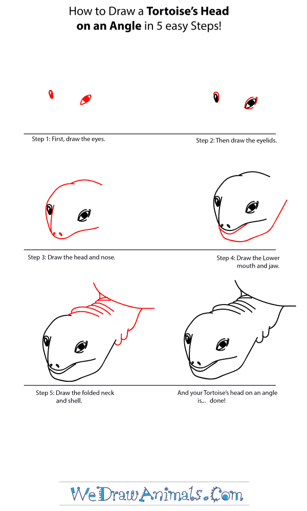 How to Draw a Tortoise Head - Step-by-Step Tutorial