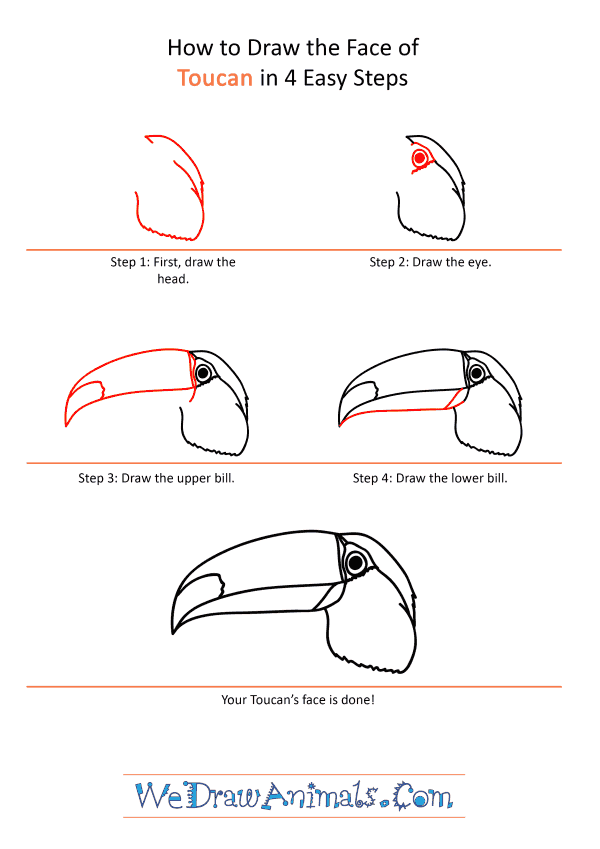 How to Draw a Toucan Face - Step-by-Step Tutorial