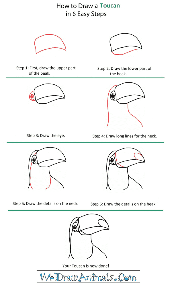How to Draw a Toucan Head - Step-by-Step Tutorial