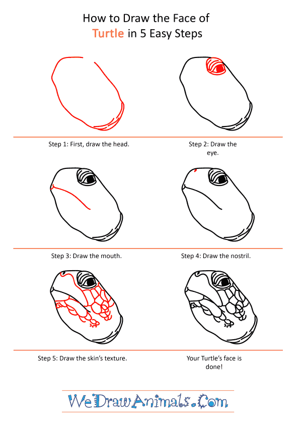 How to Draw a Turtle Face - Step-by-Step Tutorial